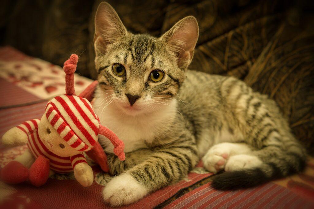 gatto con bambola di pezza giocattolo