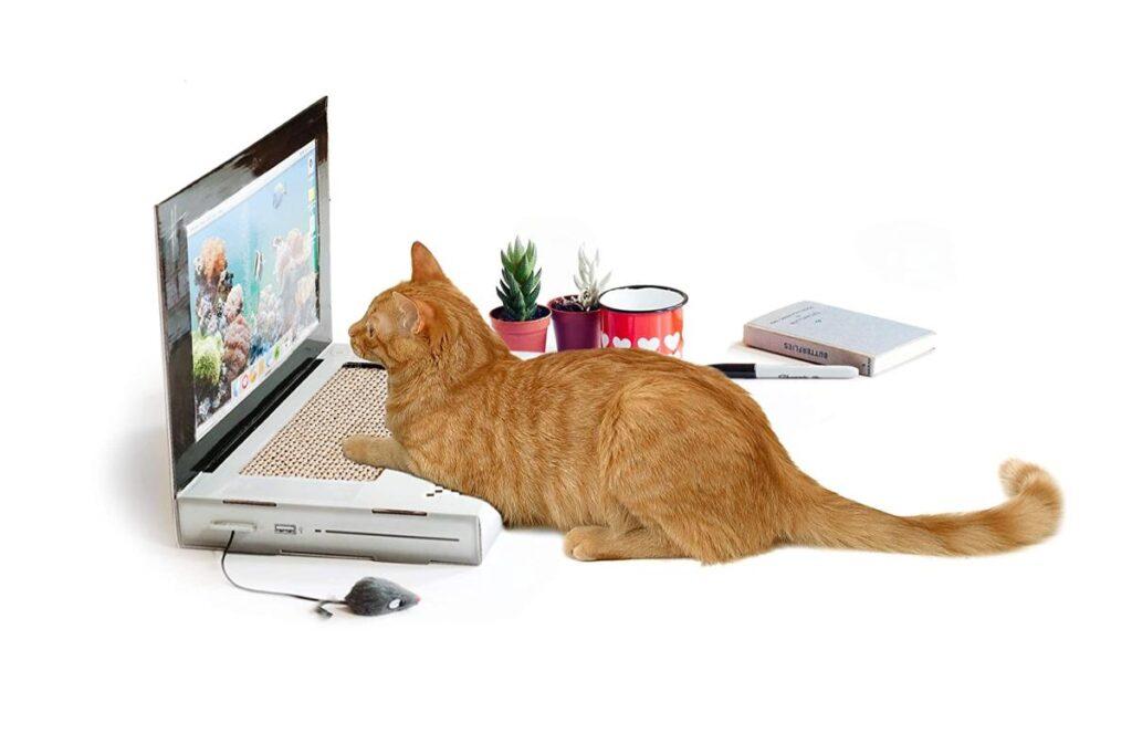 computer di cartone per gatti