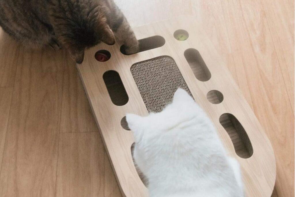 gioco con palline per gatti