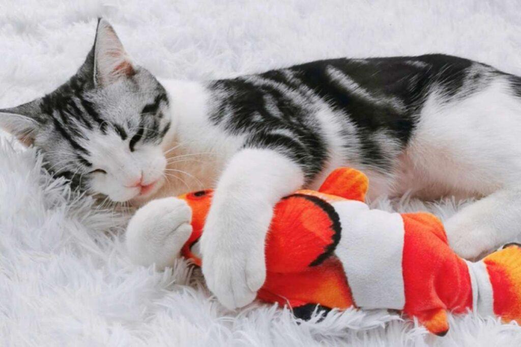 pesce giocattolo per gatto