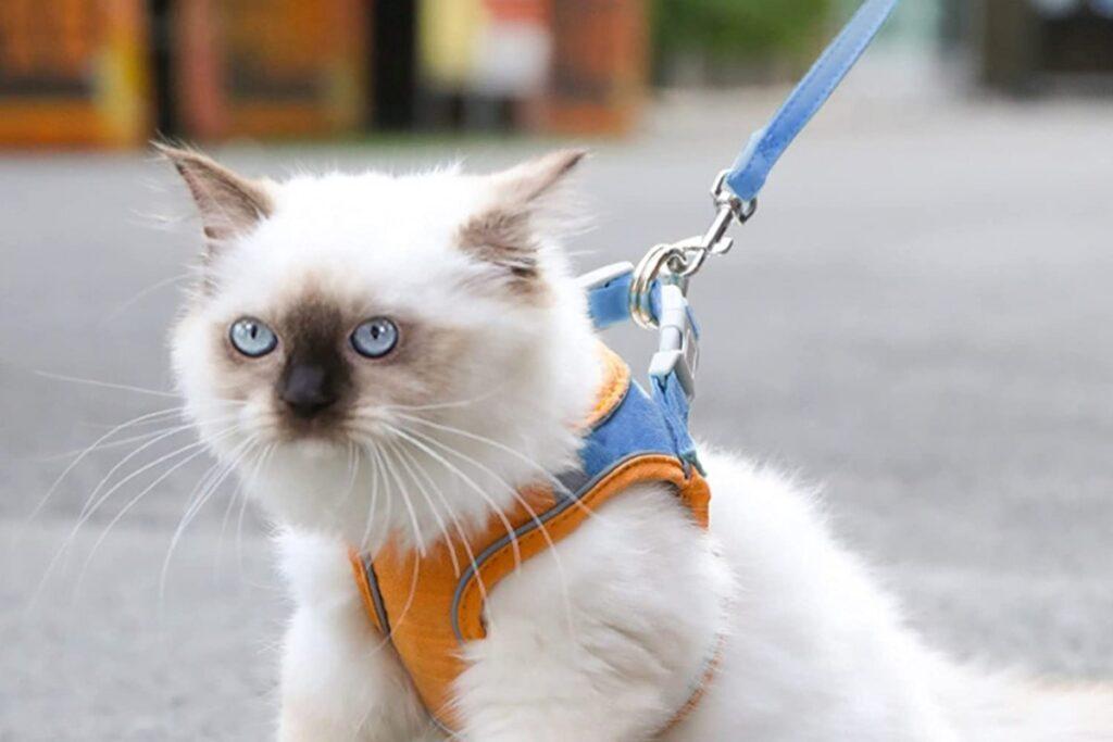 gatto a passeggio