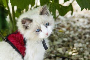 gattino a passeggio