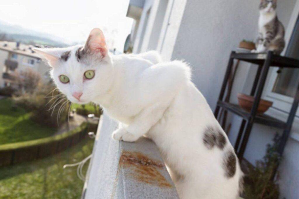 gatto si sporge dal balcone