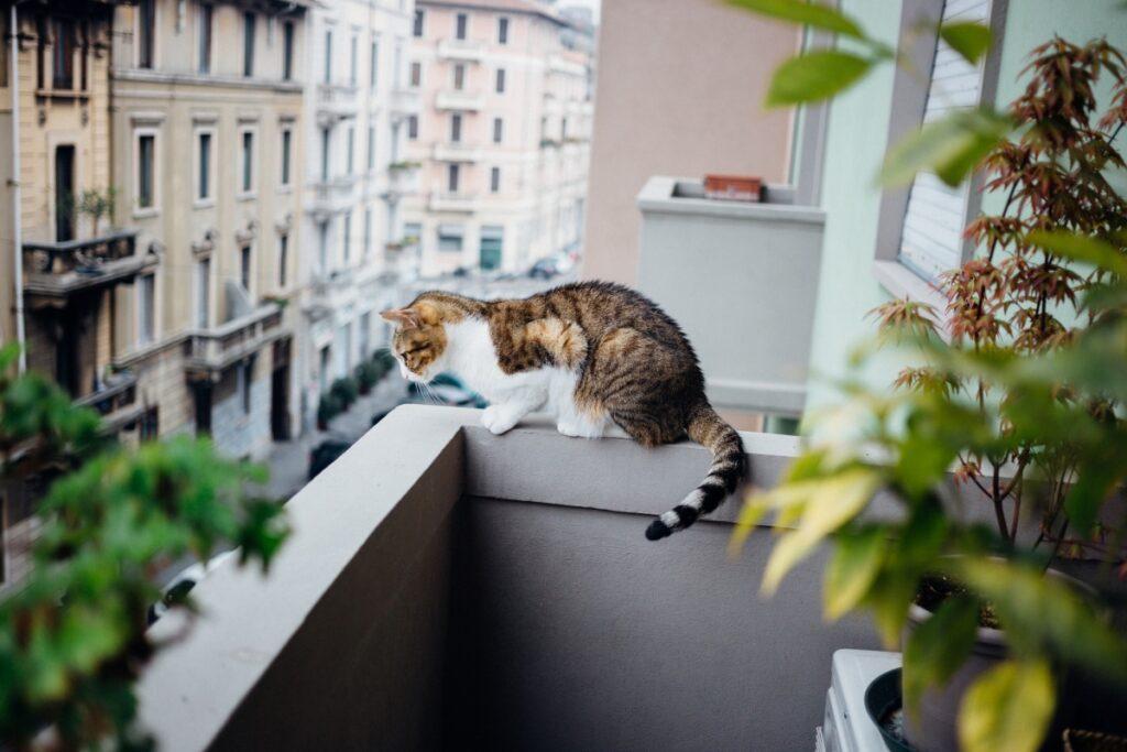 gatto in bilico su balcone