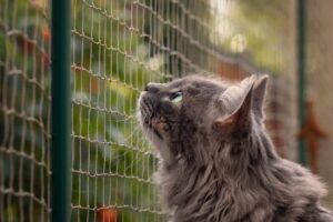 gatto guarda oltre la rete
