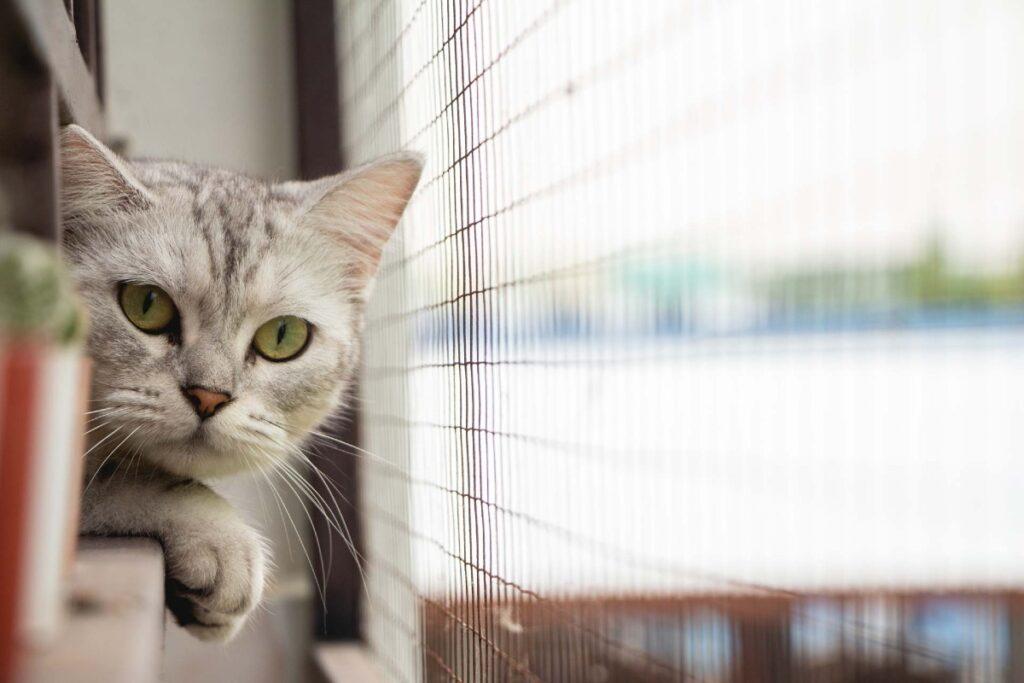 gatto affacciato