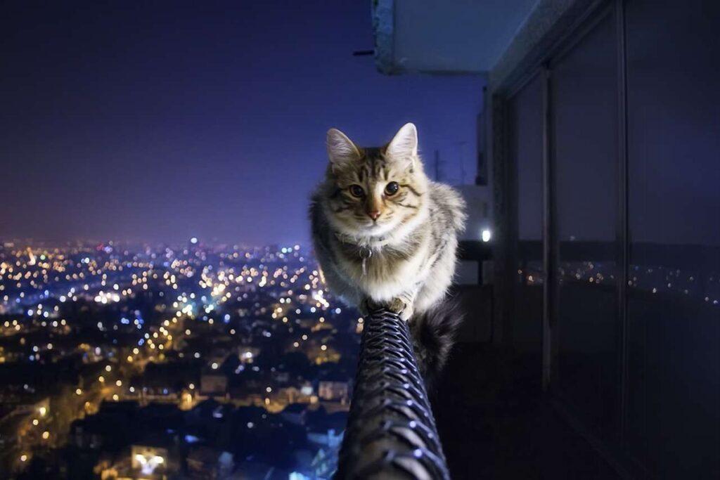 gatto in equilibrio sul balcone