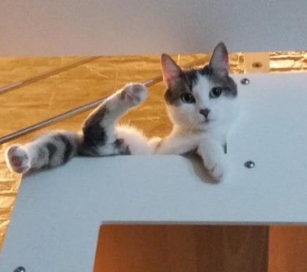 gatta relax su scale casa