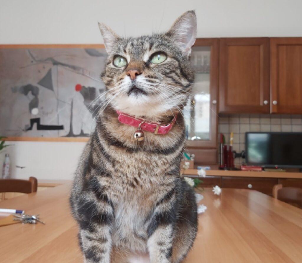 gatto campanellino ottone