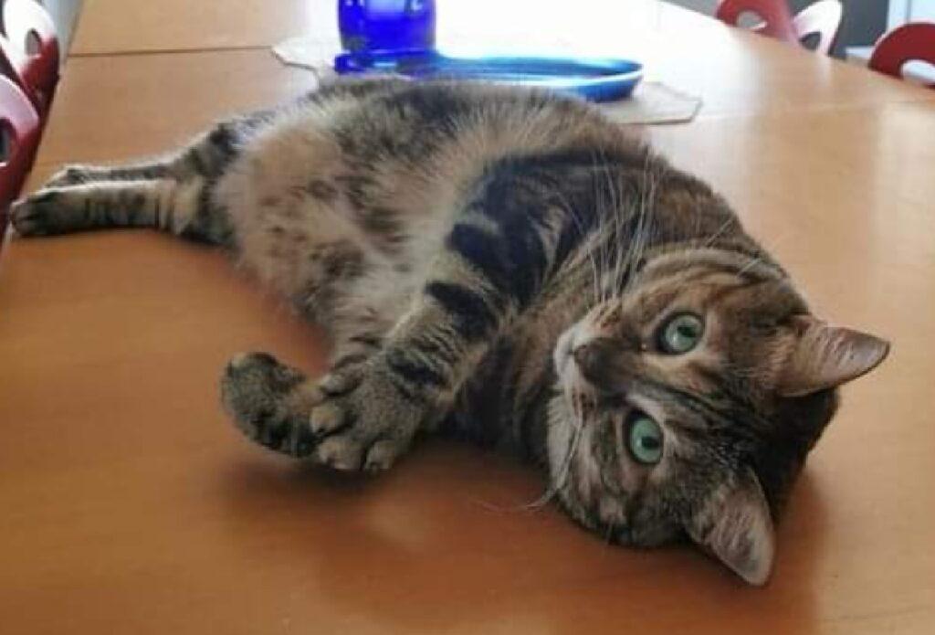 gatta occhi verdi accesi