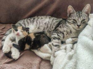 gatta con una piccola gattina
