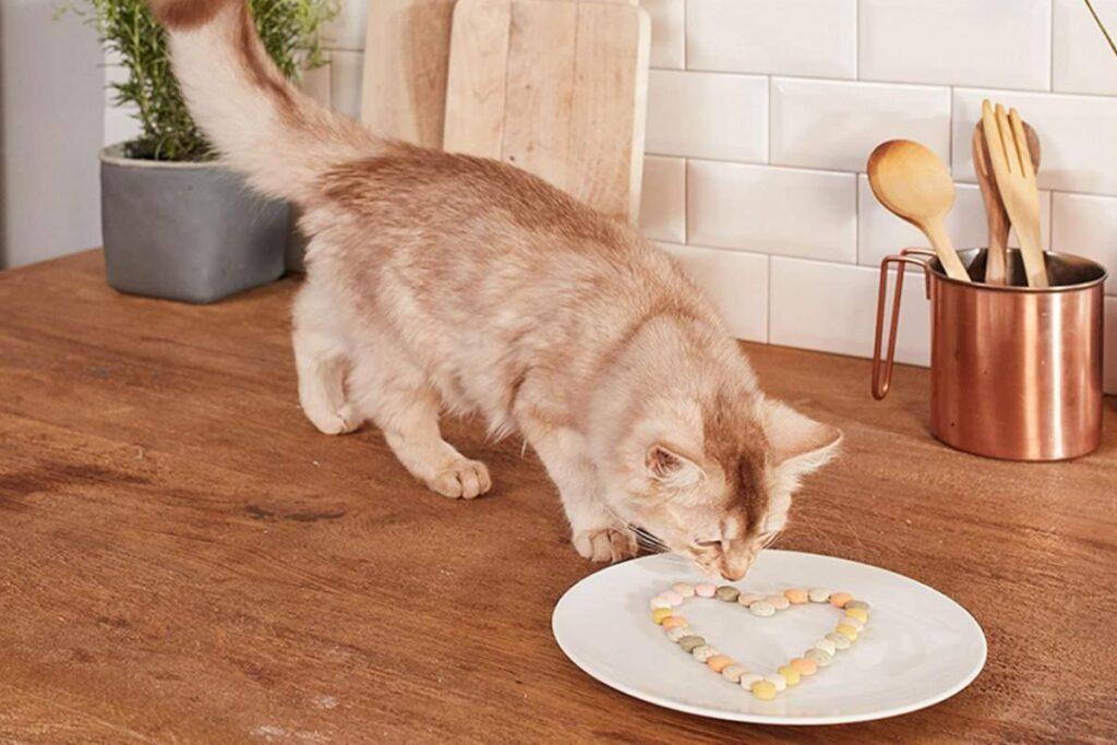 palline al formaggio per gatti