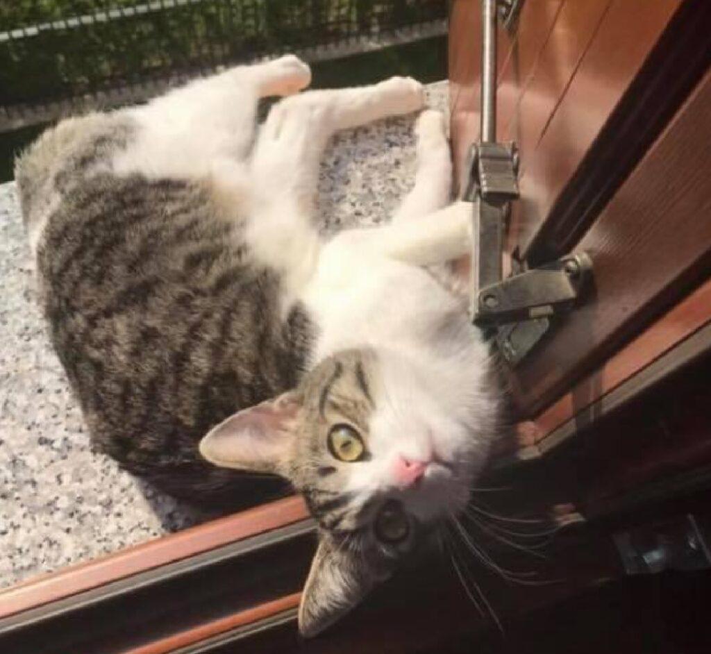 gatto seth aggrappato a porta