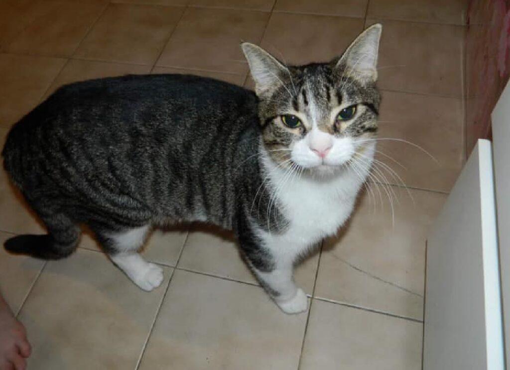 gatto su pavimento piastrelle