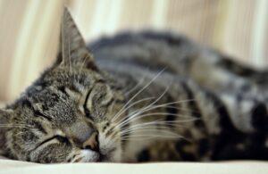 gatto vuole dormire