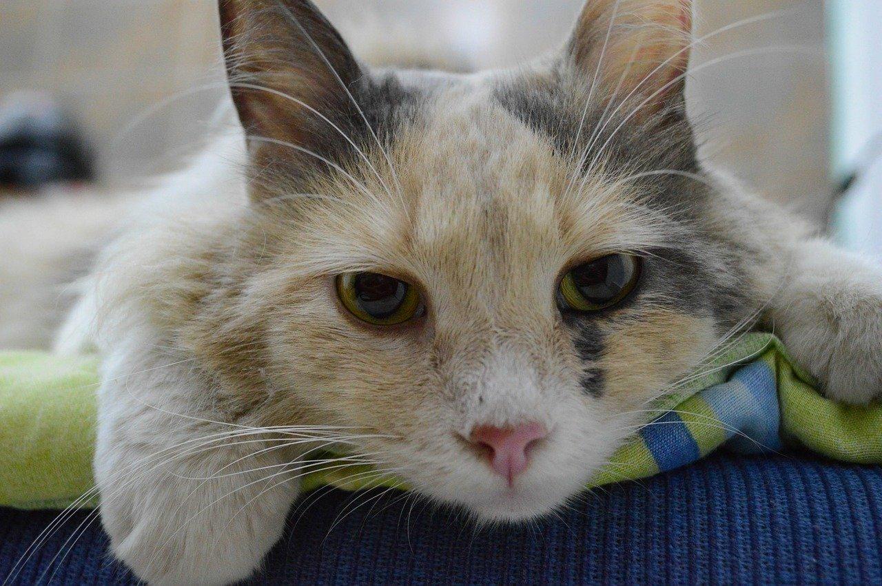 gatto occhi dolci e tristi