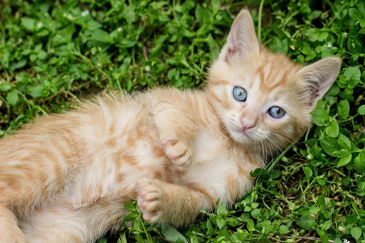 gattino dagli occhi grandi
