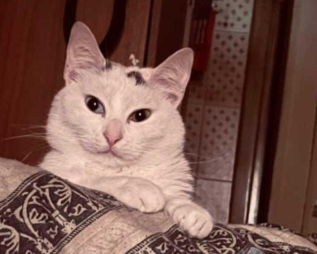 gatta calico luce soffusa
