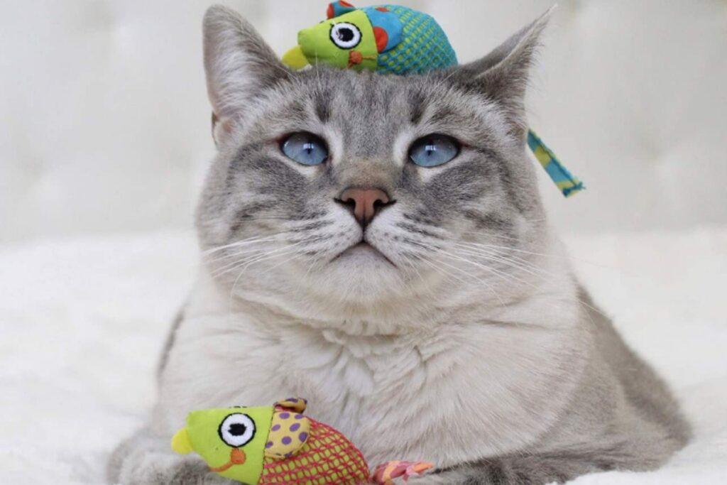 gatto con un topino giocattolo sulla testa