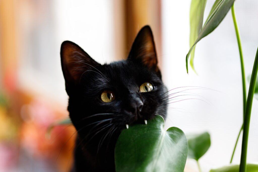 gatto morde pianta