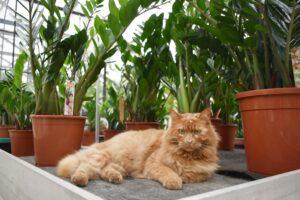 gatto tra le piante