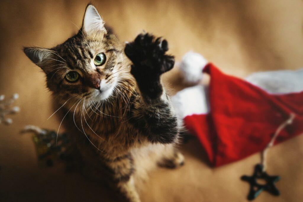 gatto a natale