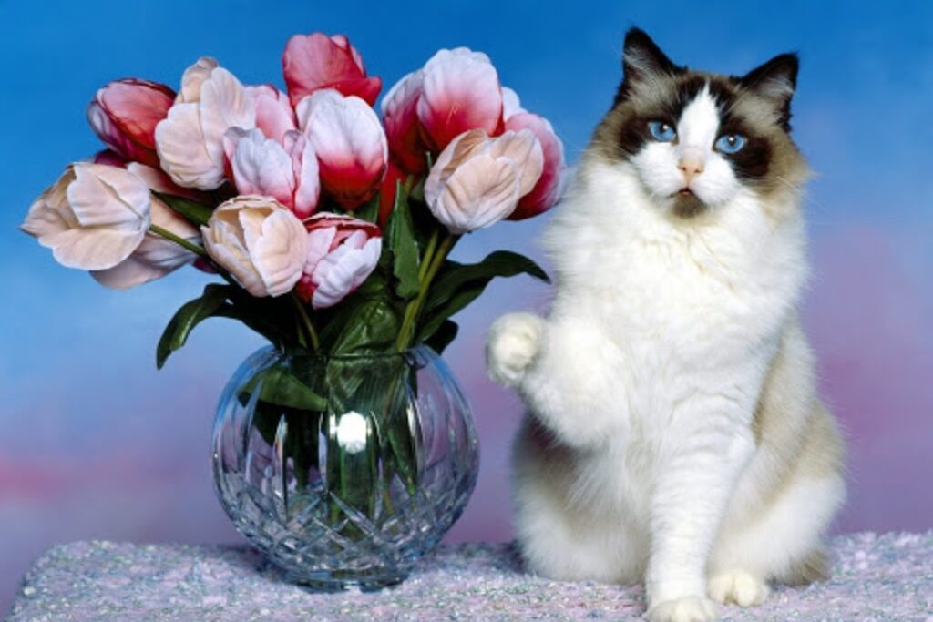 tulipani e gatto