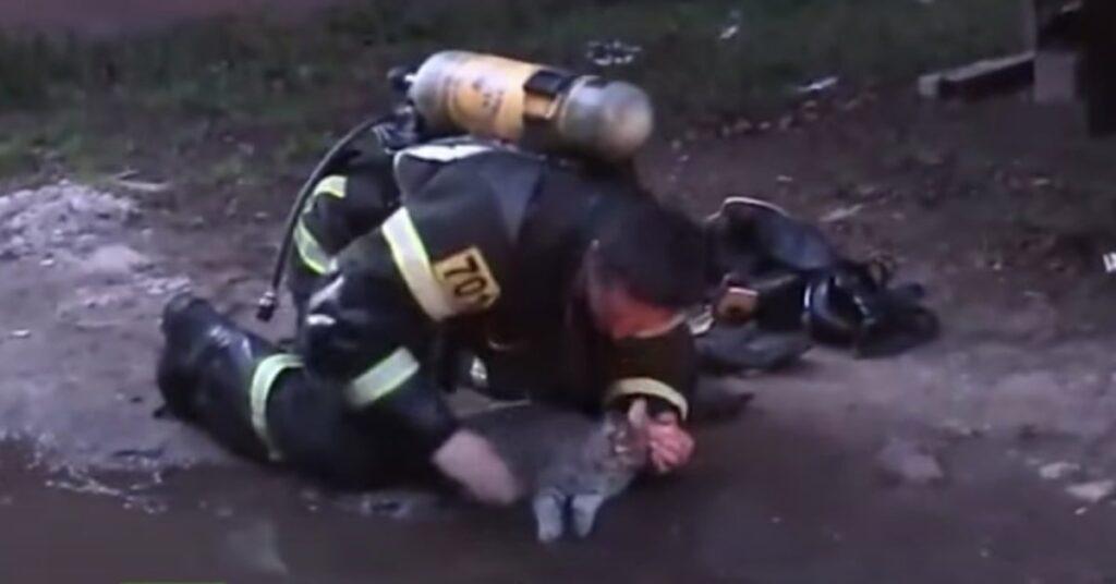 pompiere rianima un gatto intossicato dal fumo