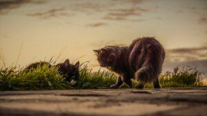 due gatti in campagna