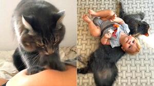 gatto nero con bambino