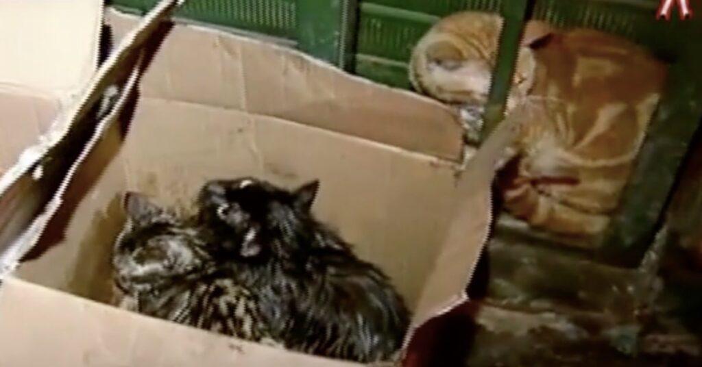 gatti salvati in una scatola