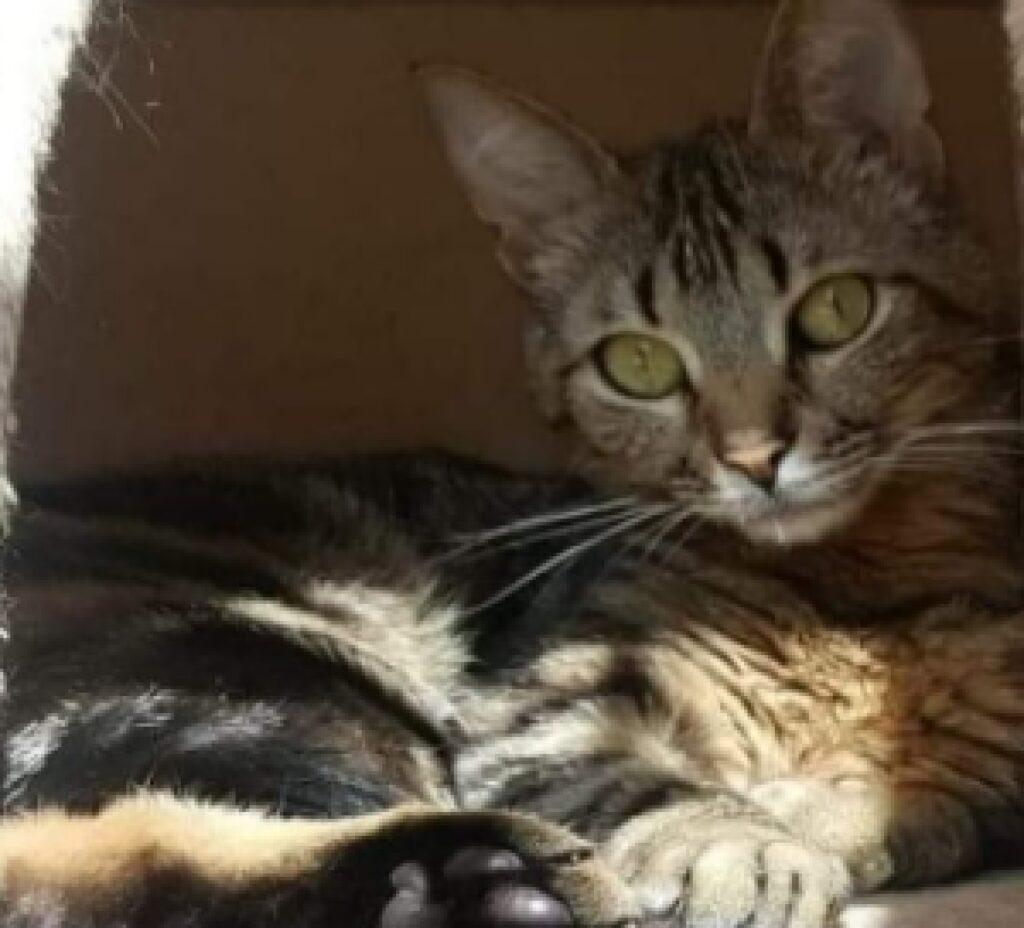 gatta soriano nascosta ombra
