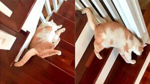 gatto sulle scale