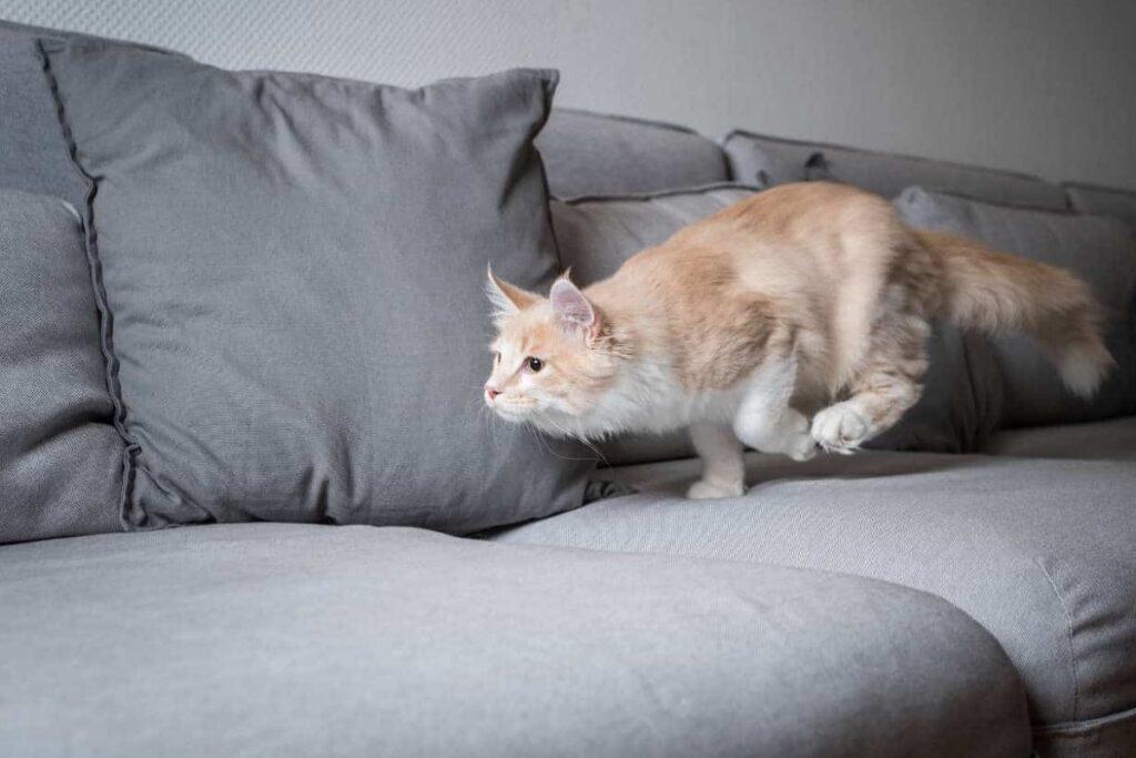 gatto che corre sul divano