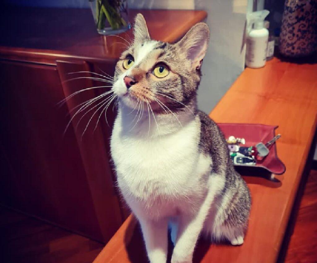 gattino dagli occhi gialli tondi