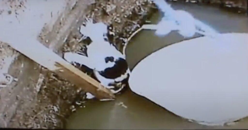 gatto caduto in una vasca viene salvato