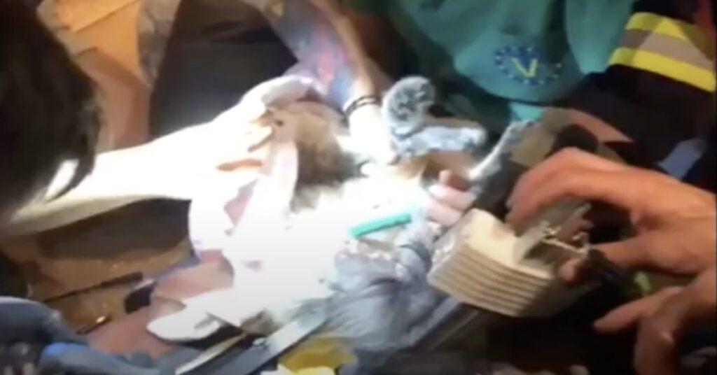 gattino incastrato in un mobile viene salvato