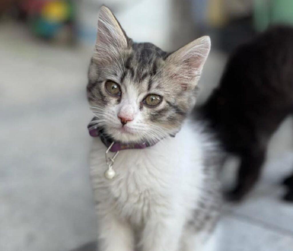 gatta lunetta collare viola