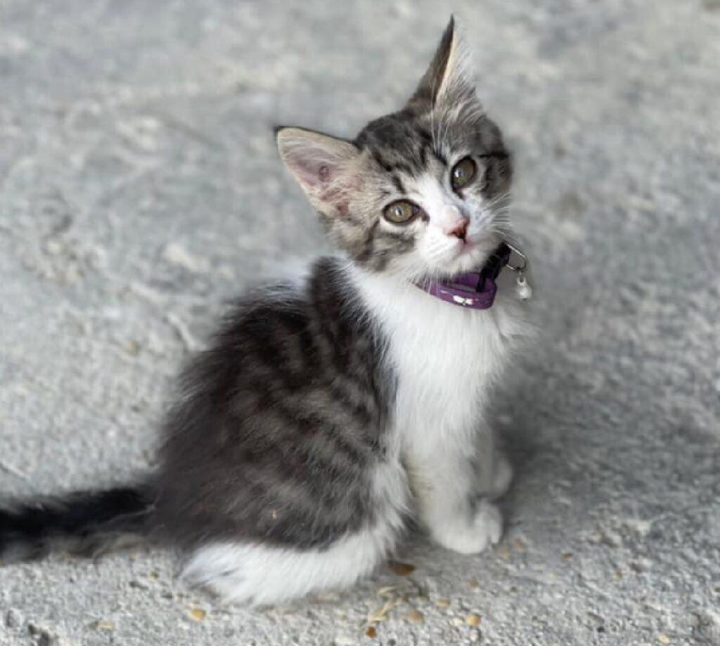 gatta lunetta girata di spalle