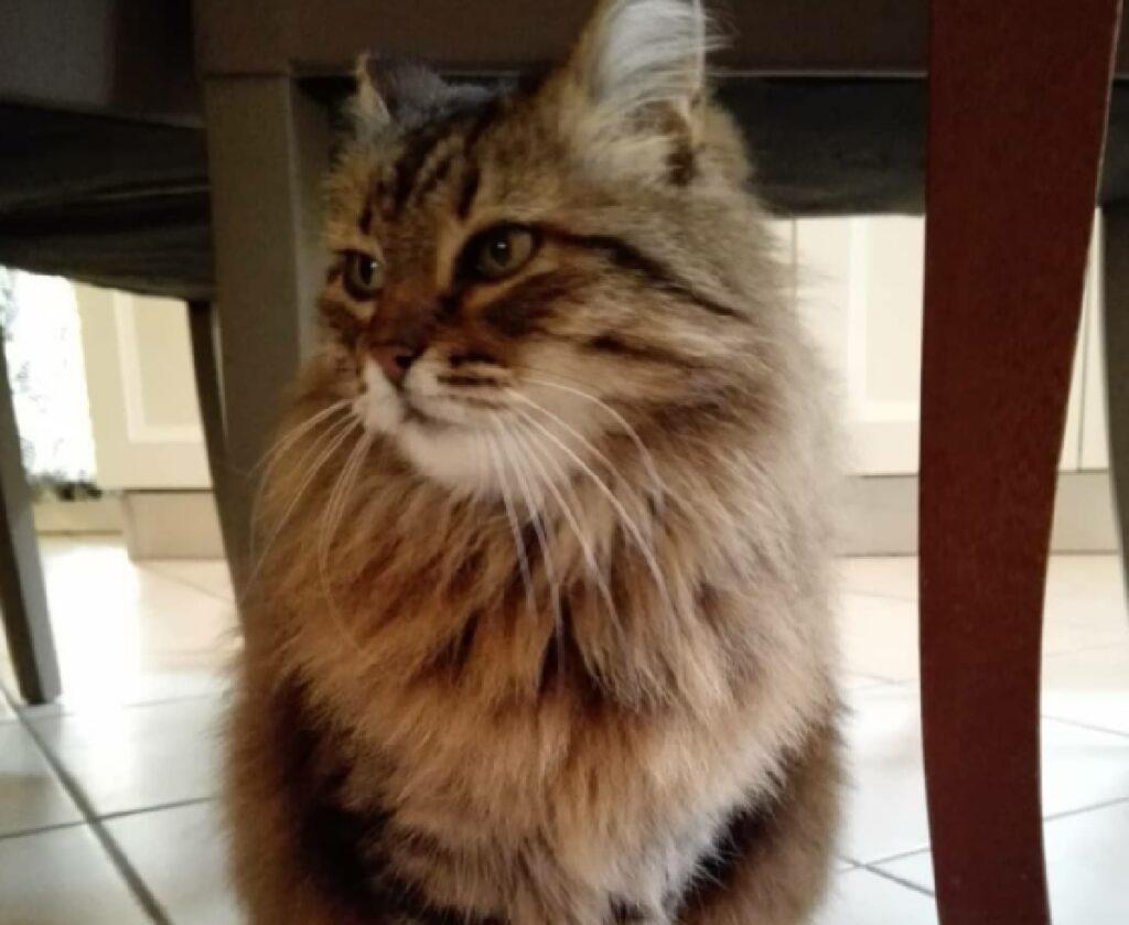 gatto sotto tavolo cucina