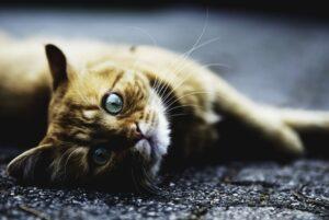 gatta che conosce luogo strada