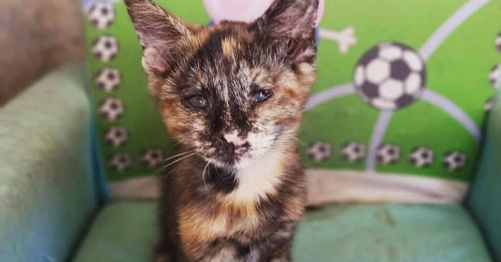 gattina cieca