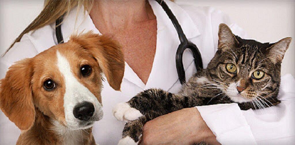 detrazione spese veterinarie 2021