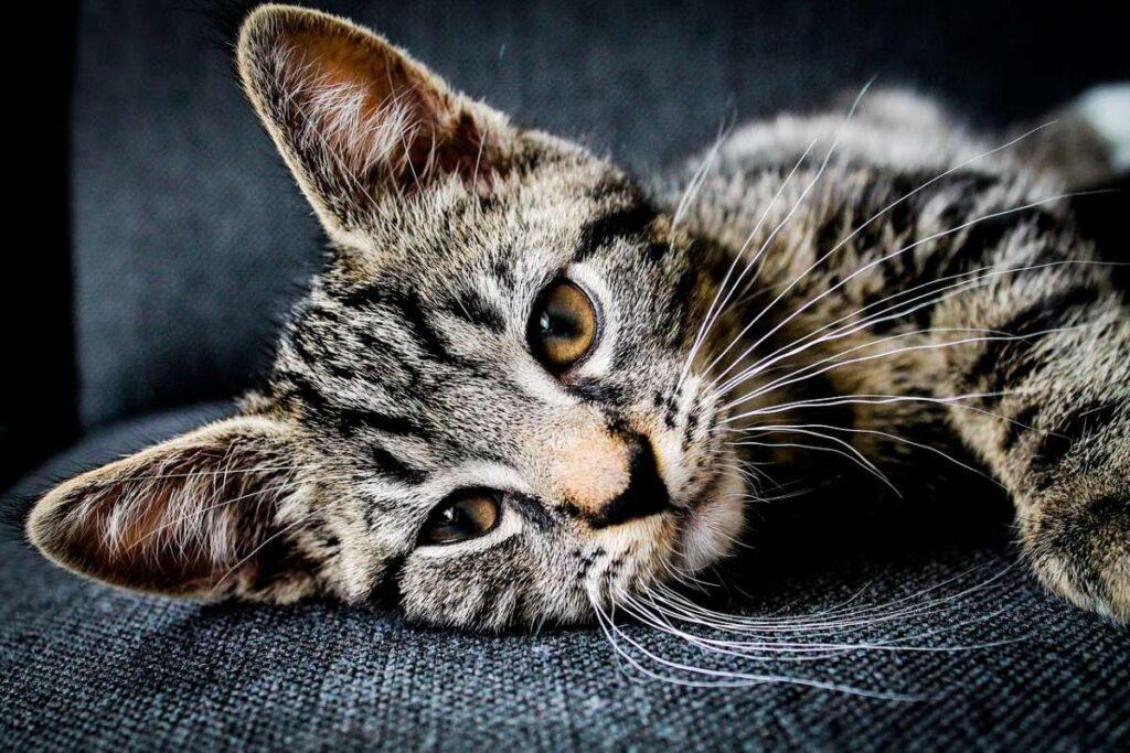 gattino triste