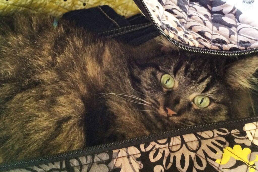 gatto dentro a una valigia