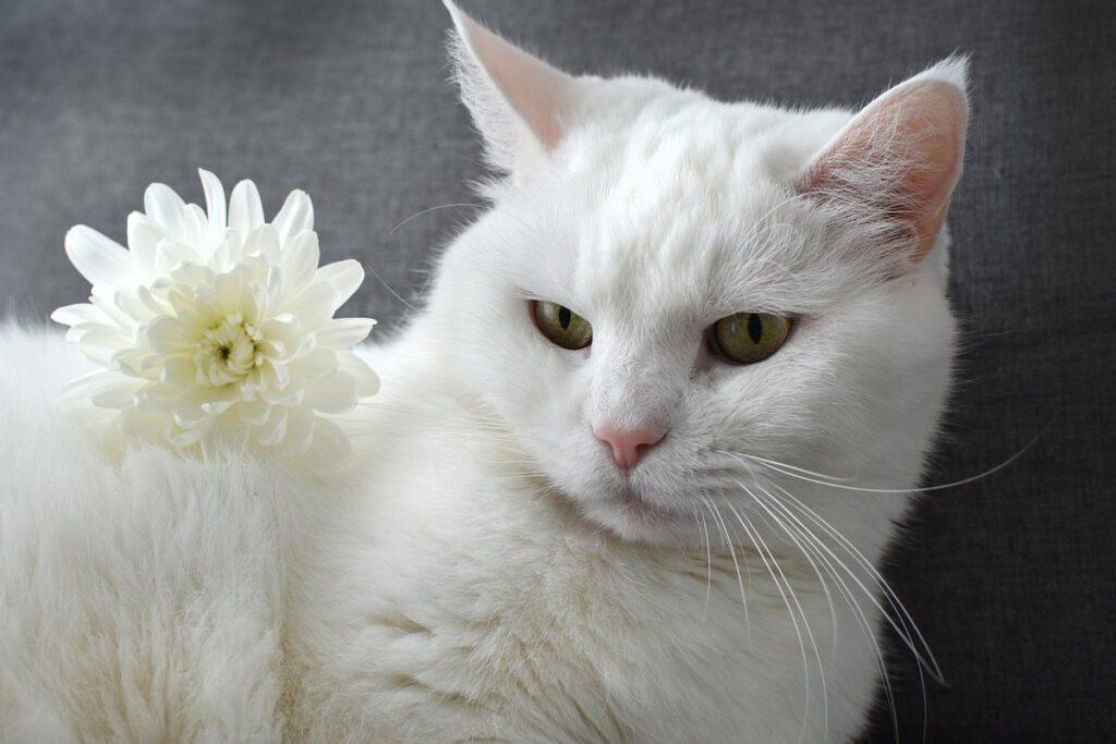 gatto bianco con fiore