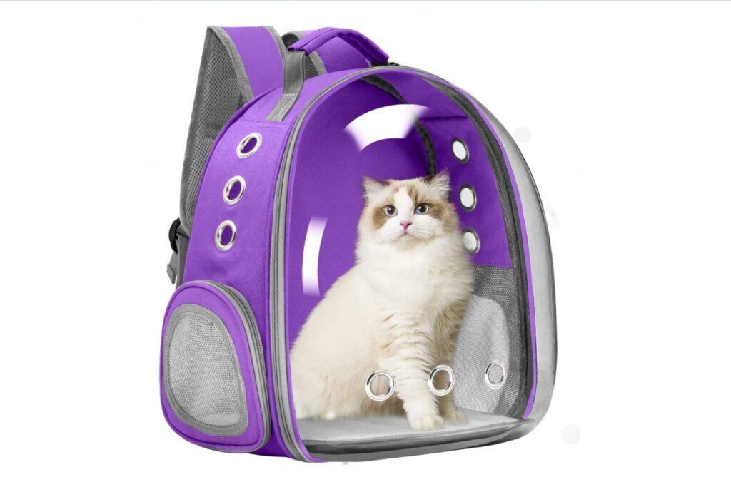 gatto bianco nello zaino viola