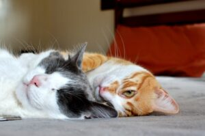 gatti dolcissimi insieme