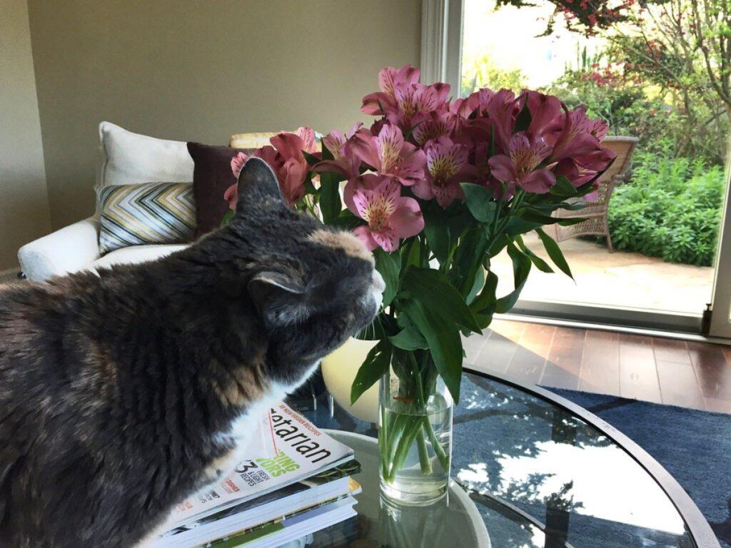 felino annusa fiori