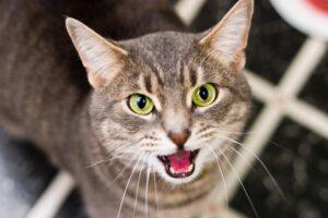 felino gatto occhi